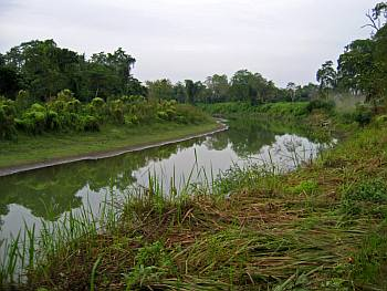 Kaziranga Jungle